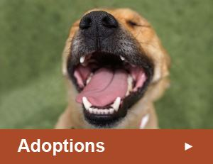 Adoptions Button